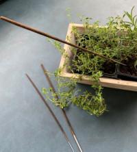 Lavender-Citronella Incense - Product Image
