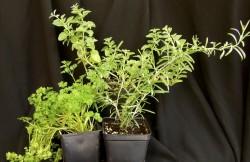 Live Plants - Product Image